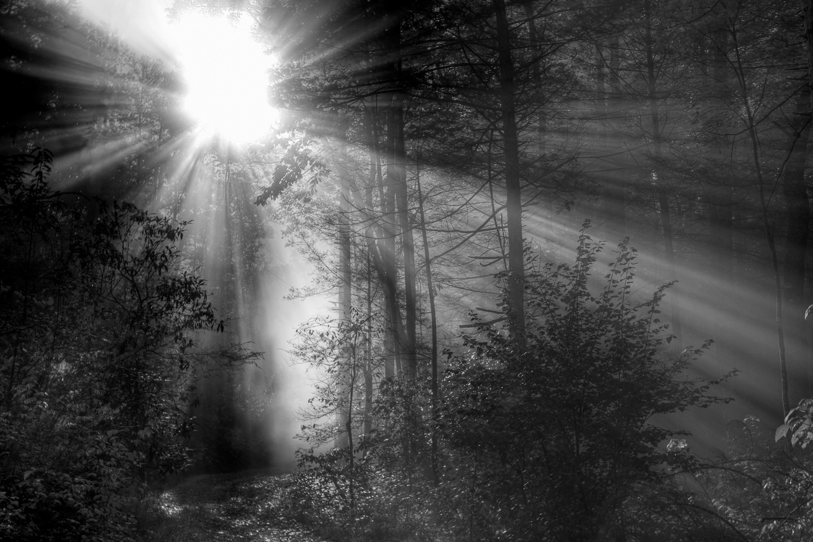 Black and white portfolio smoky mountain pictures eric gebhart photography - Black and wait ...