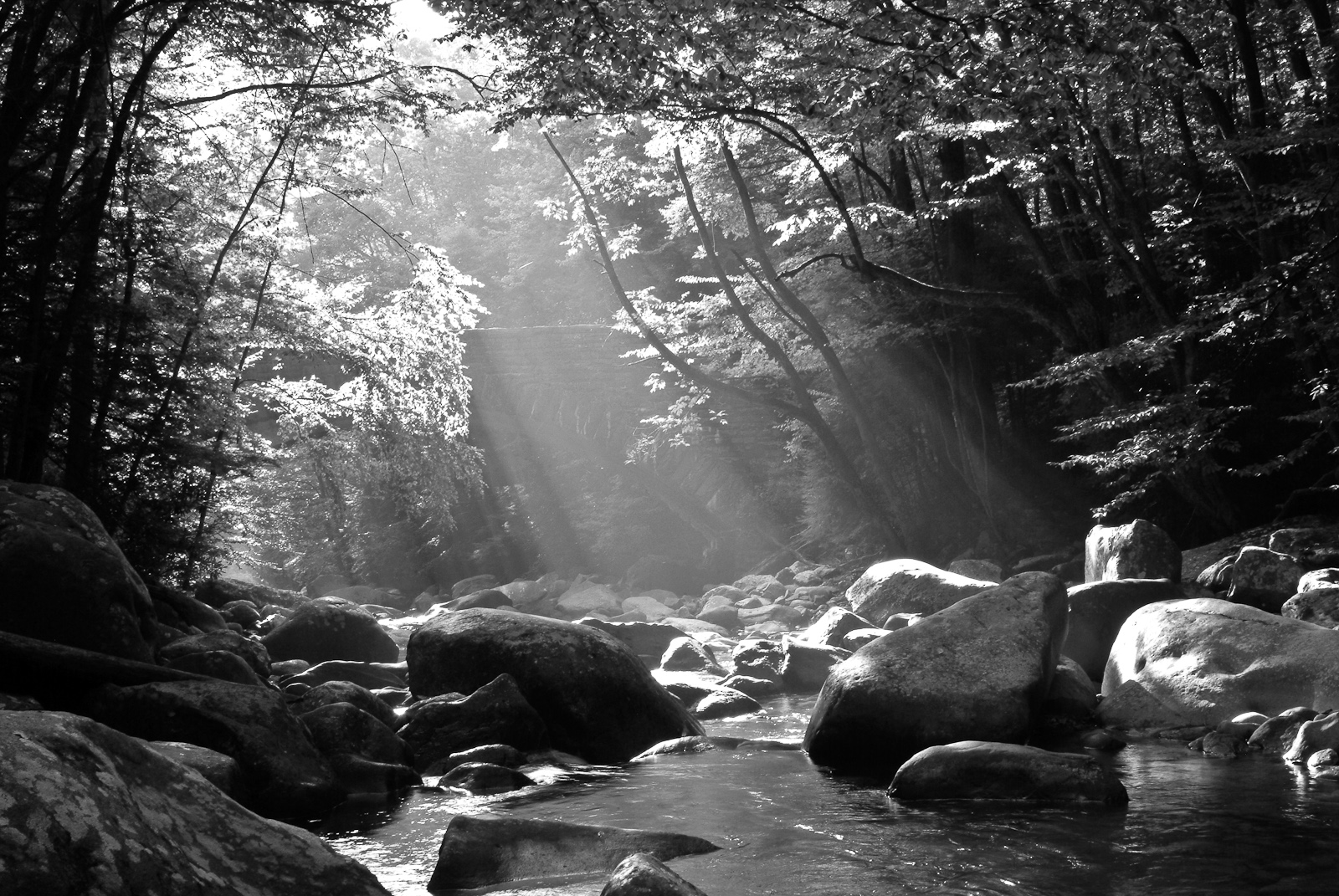 Black and White Portfolio | Smoky Mountain Pictures, Eric Gebhart ...: smokymountainpictures.com/black-and-white-portfolio