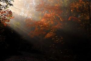 smoky-mountain-landscape002