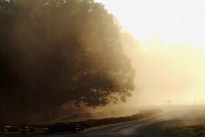 smoky-mountain-landscape006
