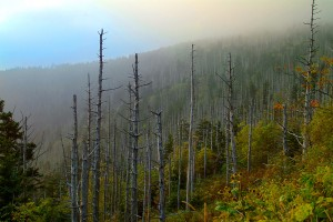 smoky-mountain-landscape013