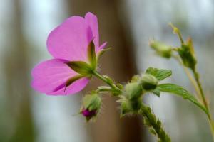 smoky-mountain-wildflowers-010