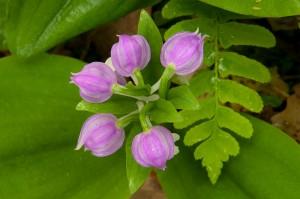 smoky-mountain-wildflowers-014